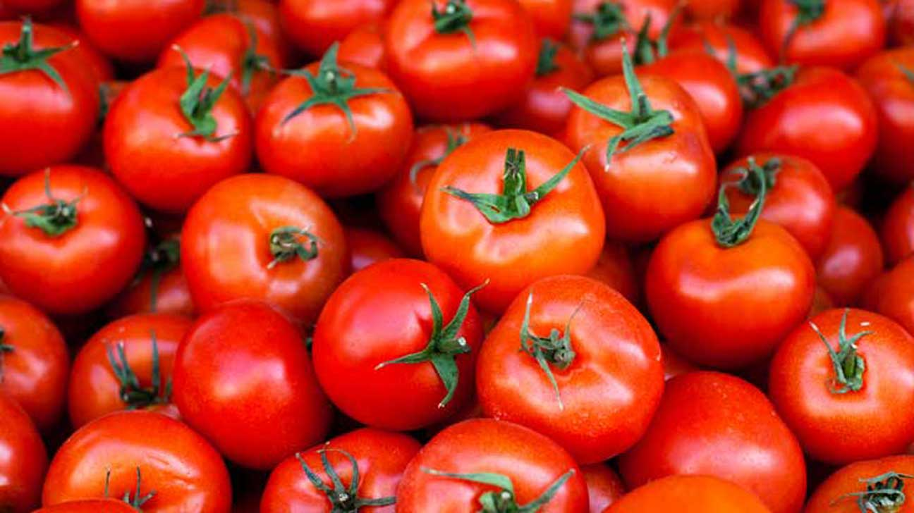 Discovering Tomatoes